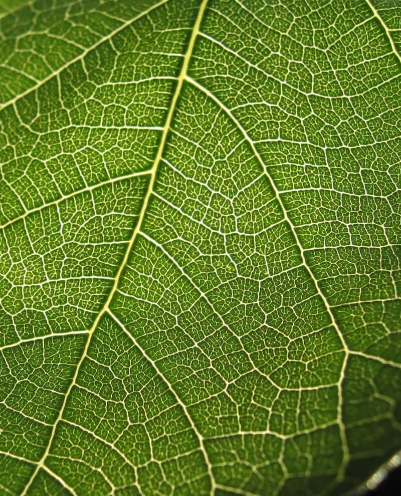 Compoz compositeur Huile essentielle naturelle figue verte feuille parfum ambiance intérieur