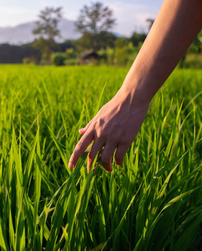 Compoz compositeur Huile essentielle naturelle herbe fraiche parfum ambiance maison