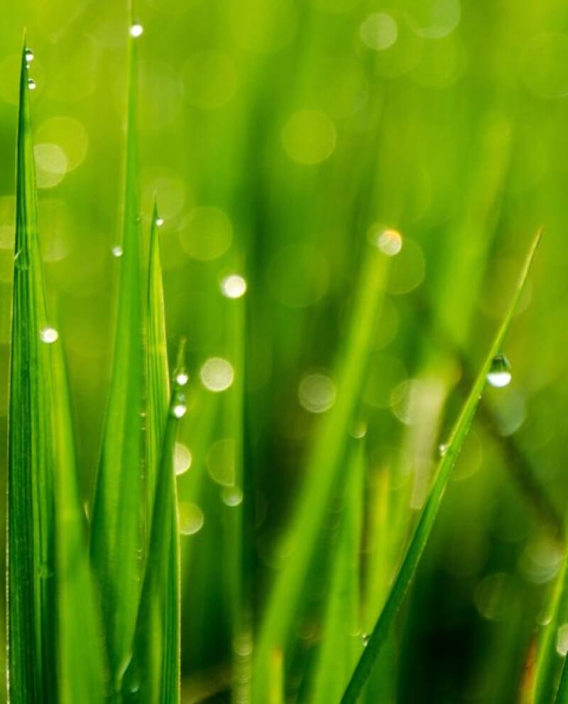 Compoz compositeur Huile essentielle naturelle herbe fraiche rosée