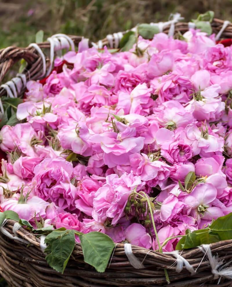 rose perfume essential oils compoz