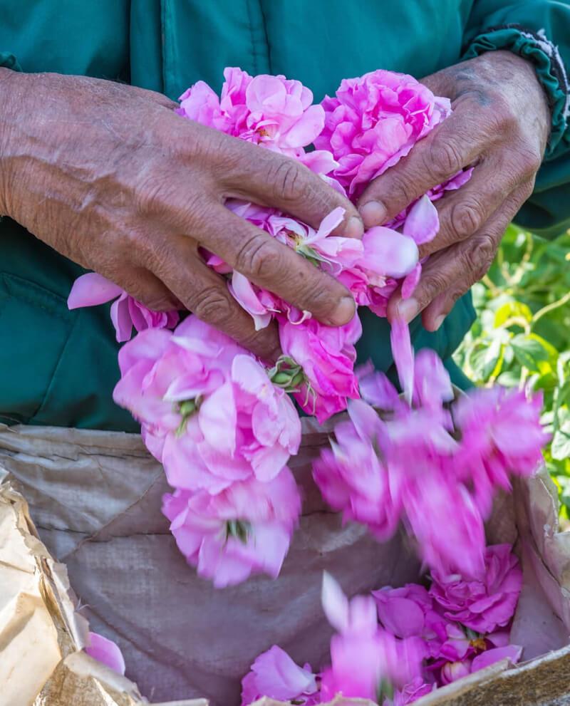 Compoz compositeur Huile essentielle naturelle rose culture sourcing ethique