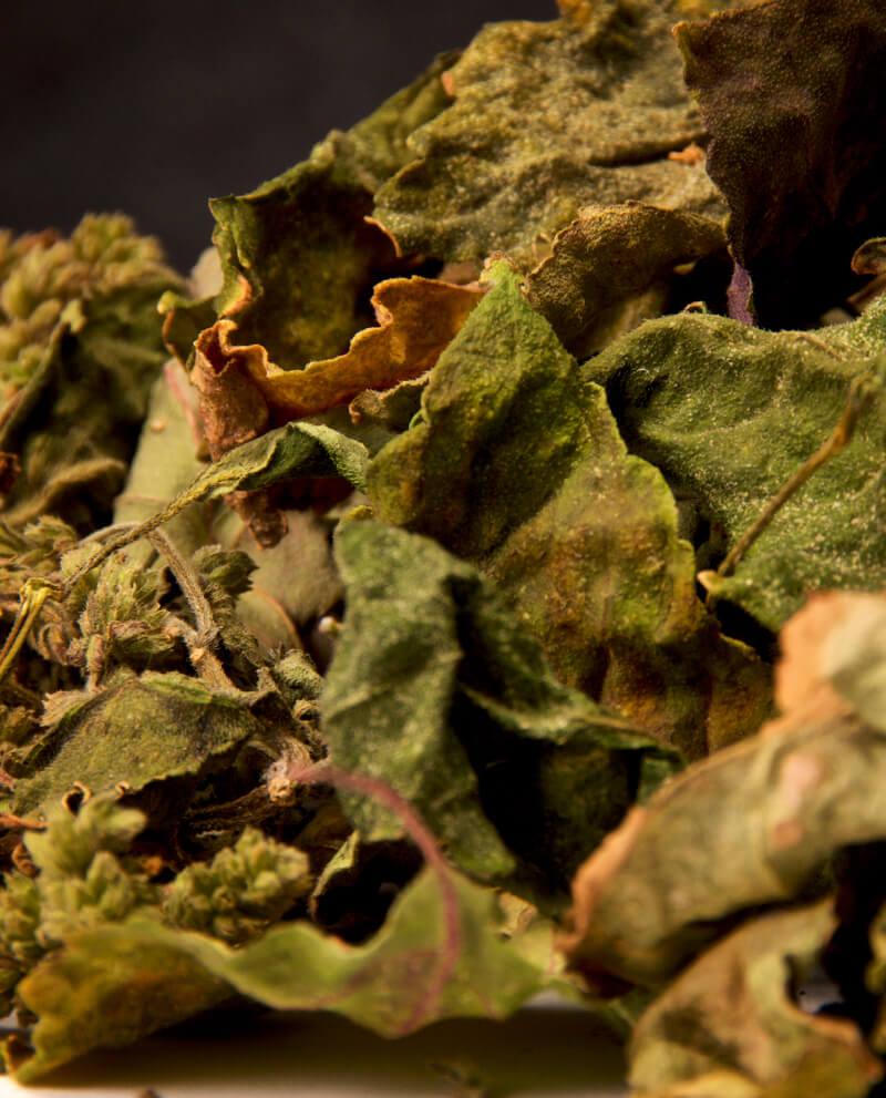 compoz compositeur cartouche huile essentielle naturelle patchouli feuille séchée