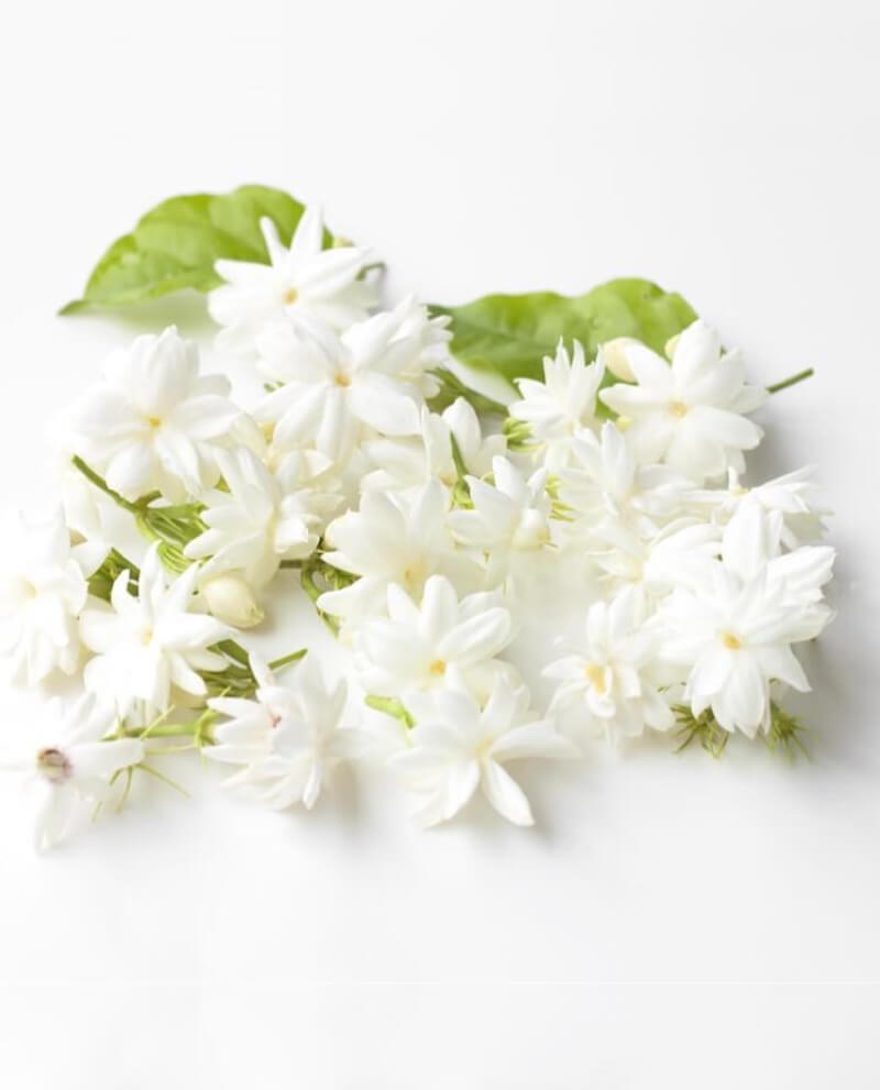 compoz compositeur huile essentielle naturelle jasmin sambac parfum bouquet nature