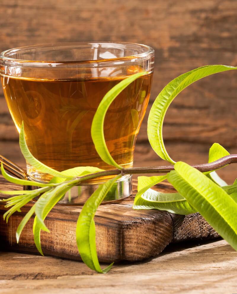verbena infusion essential oil