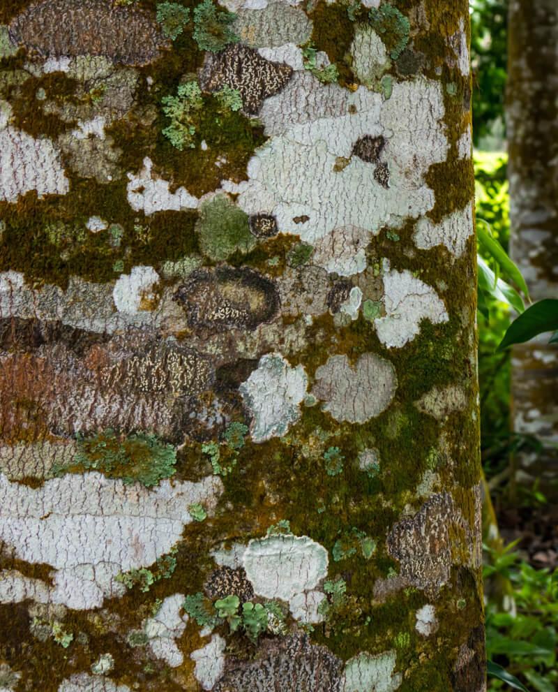 Compoz Parfum cartouche bois oud compositeur cartouche huile essentielle naturelle nature arbre plantation naturalite