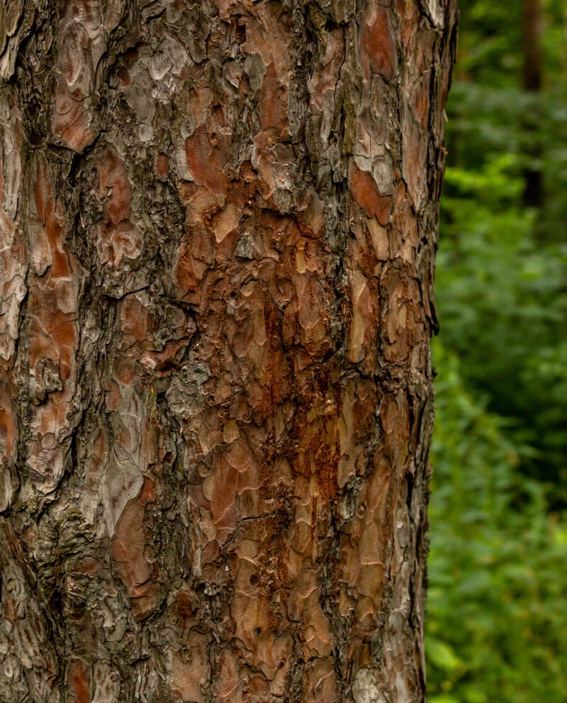 Compoz compositeur cartouche huile essentielle naturelle accord pinede nature ecorce pin qualite givaudan haute parfumerie diffusion parfum ambiance interieur maison evasion nature