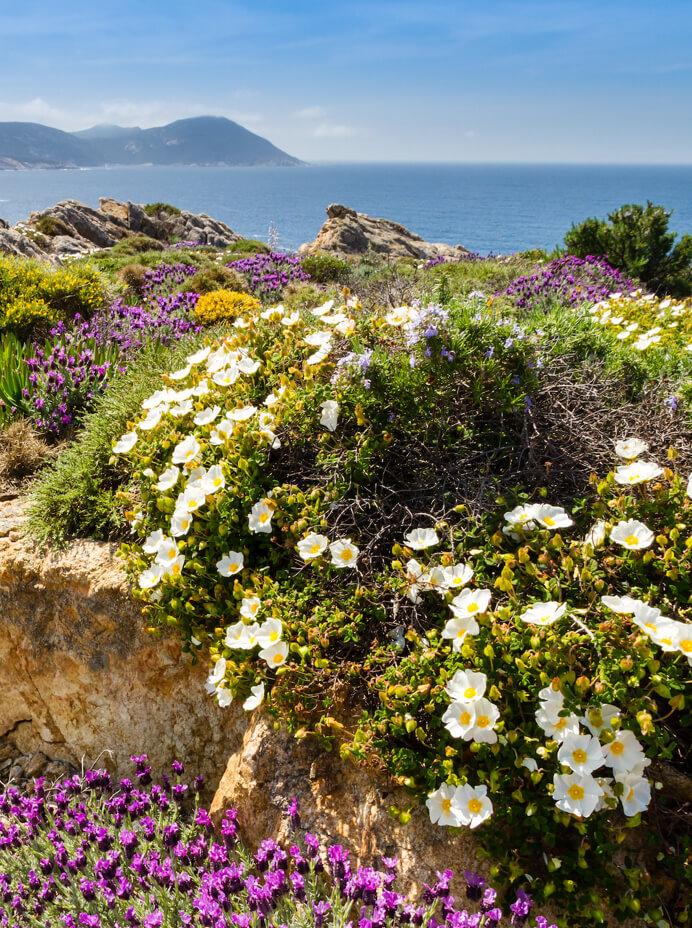 aromatherapie bien-être émotion lien odeur huiles essentielles compoz parfum olfactotherapie