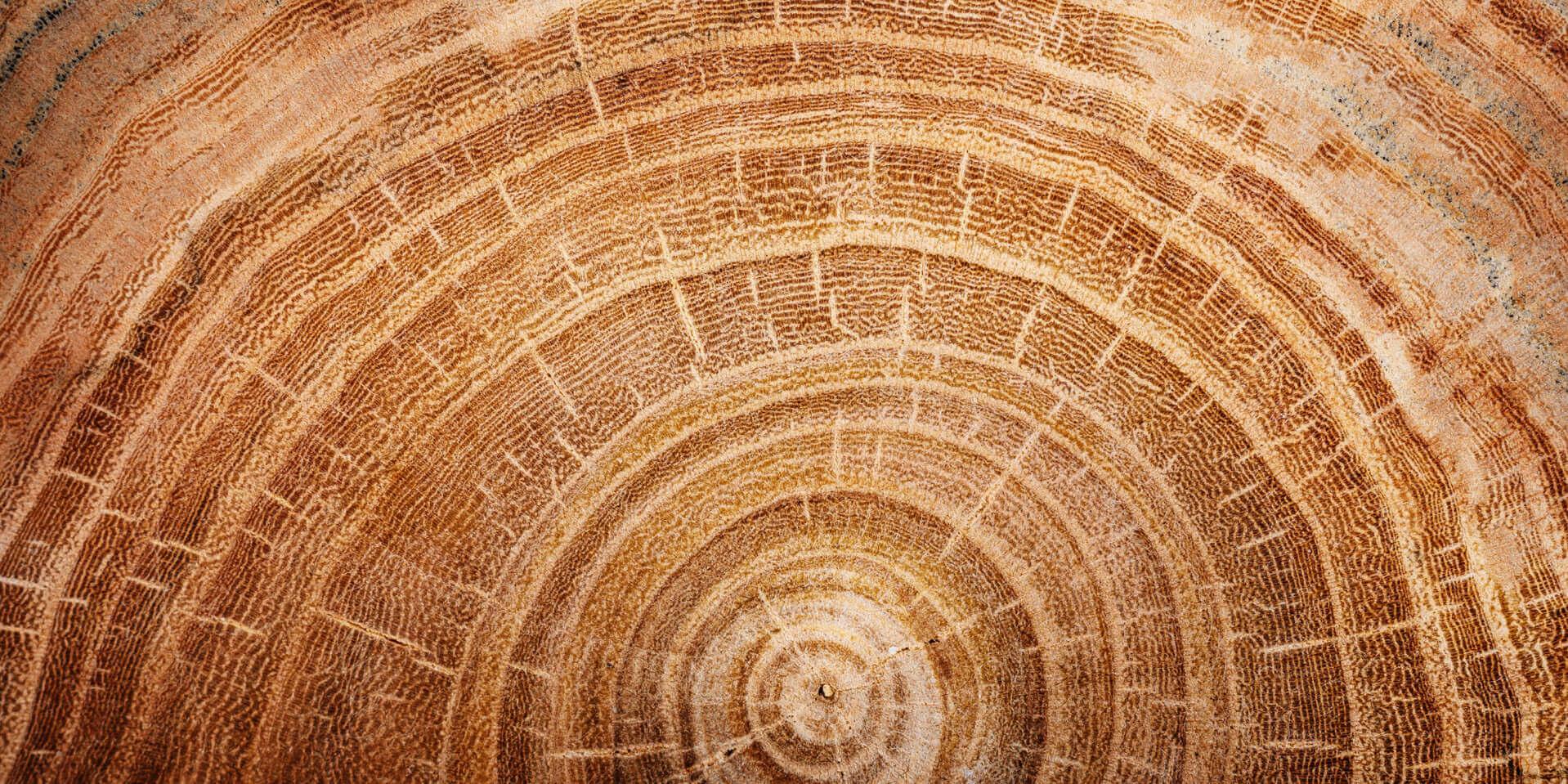 blond wood harvest essential oil