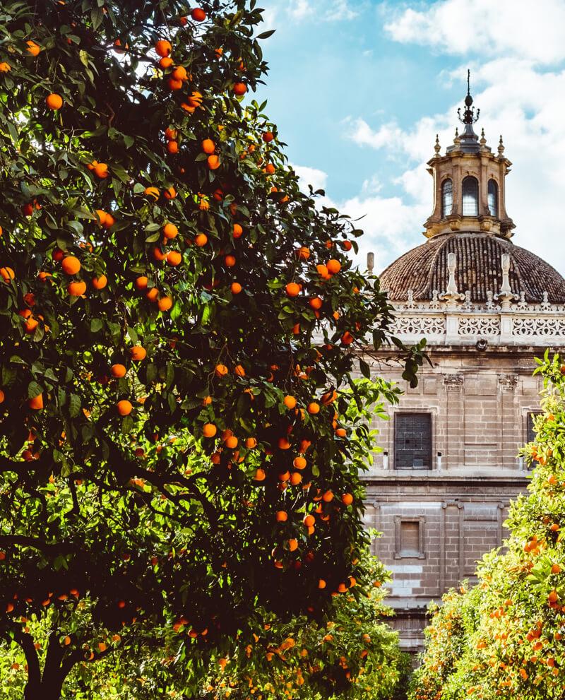 cartouche-huile-essentielle-naturelle-neroli-fleur-oranger-voyage-beaute-paysage-odeur-parfum-souvenir-haute-parfumerie-ambiance-interieur-maison-nature