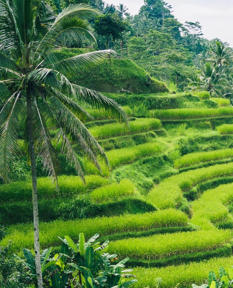 compoz-compositeur-huile-essentielle-naturelle patchouli-indonesie