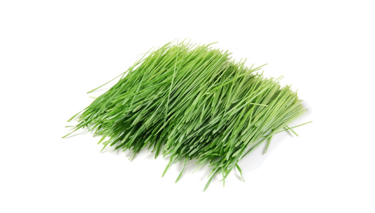 fresh grass perfume essential oil compoz